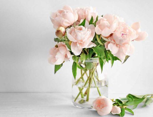 Comment conserver des roses